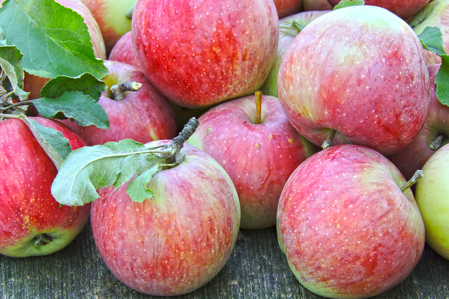 bigstock-Fresh-Red-Apples-Harvest-Of-A-287065726 (1)