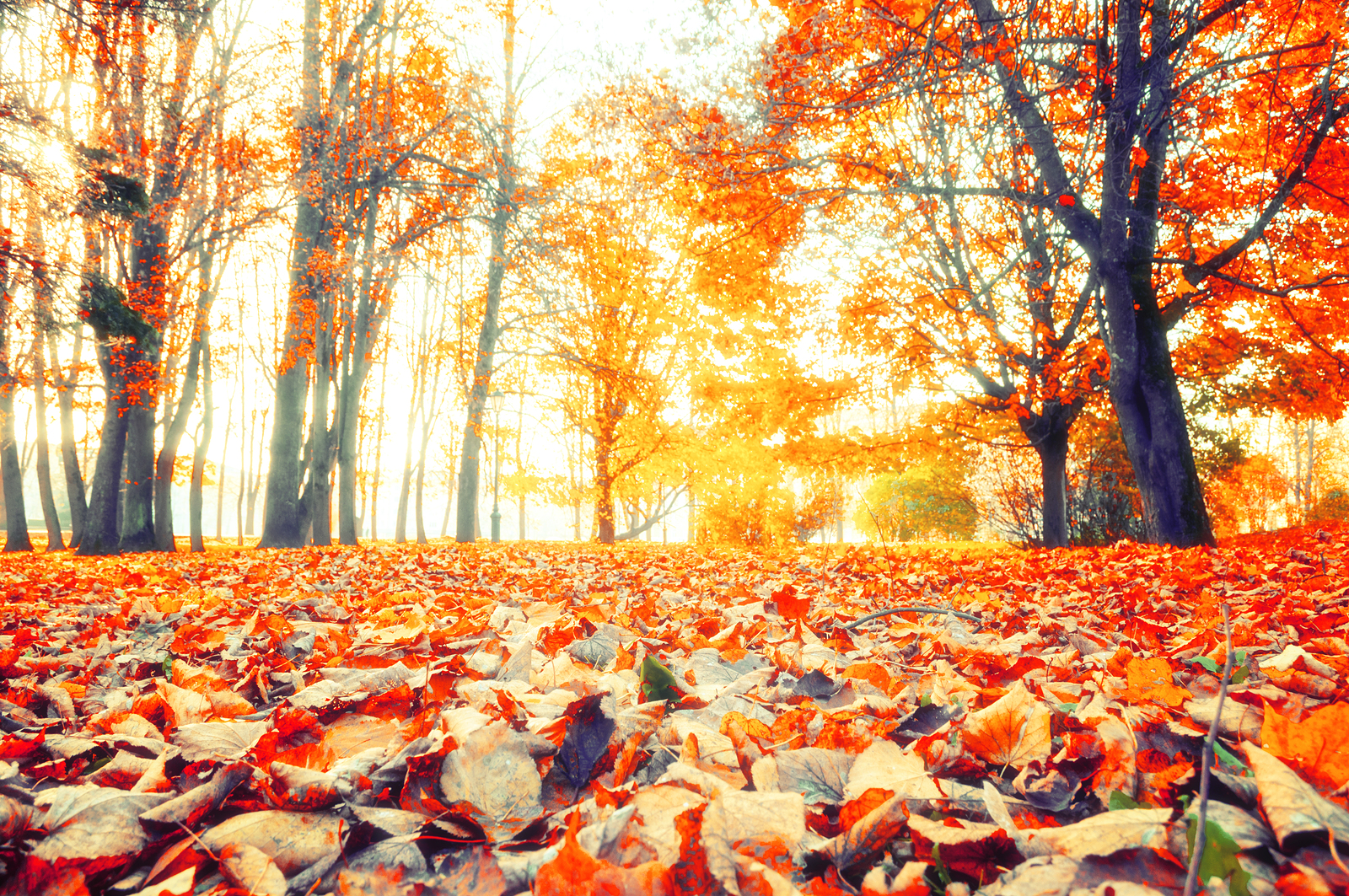 Autumn woods and forest floor covered in leaves
